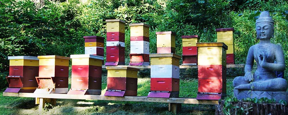 Practitioners of modern beekeeping tend to use variations...