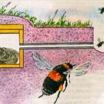 house-for-bumblebees_01-524x363
