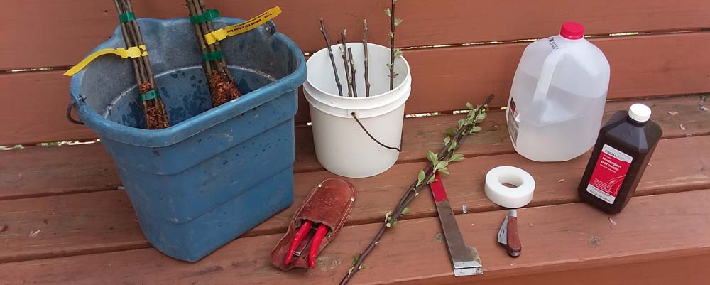 Grafting isn't just for Queens if you have fruit trees or a garden
